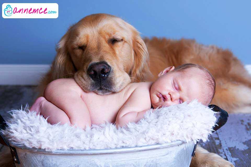 Ailenizin Sağlığı İçin Evcil Hayvanlarınıza Dikkat