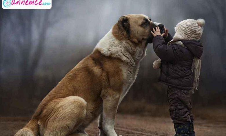 Köpek Beslemenin Çocuk Gelişimine Olumlu Etkileri